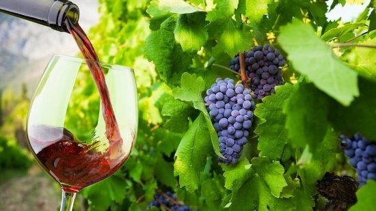 Dalmatian Wine Cruise 2022 (Dubrovnik – Dubrovnik)